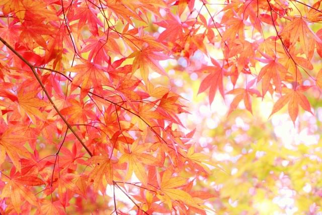 エアコンクリーニング ,時期,秋